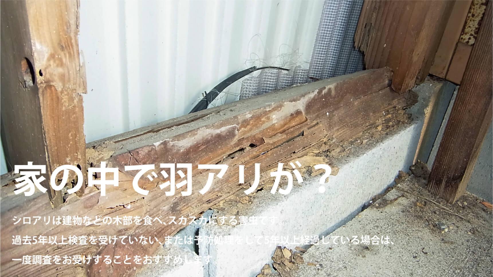 家の中で羽アリが? シロアリは建物などの木部を食べ、スカスカにする害虫です。過去5年以上の検査を受けていない、または予防処理をして5年以上経過している場合は、一度調査をお受けすることをおすすめします。